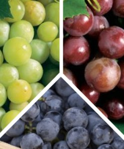 Grape Mwdley