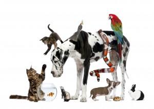 Группа животных вместе на белом фоне