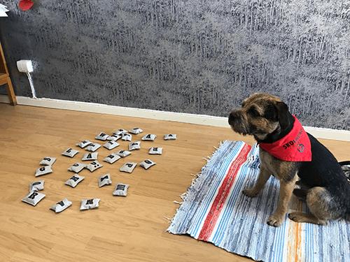 Hund med memory