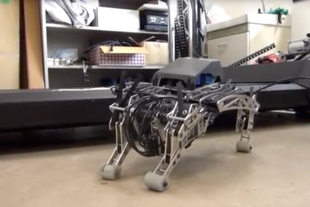 Robot-Dogs