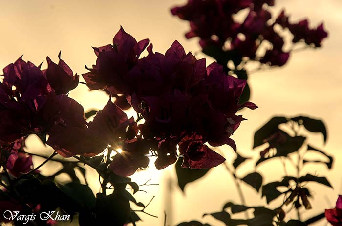 flowers-at-india-gate-2