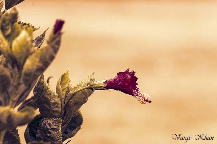 photography-at-safdarjung-tomb-10
