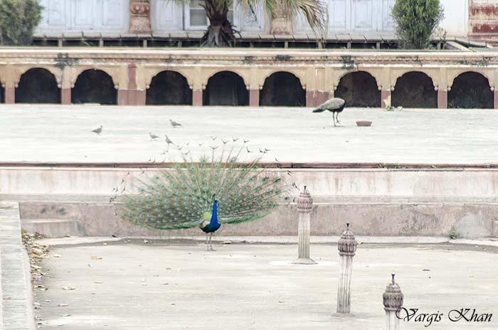 photography-at-safdarjung-tomb-5