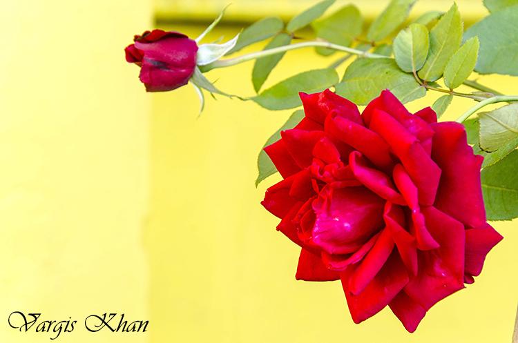 vargis-khan-photography-flowers-5