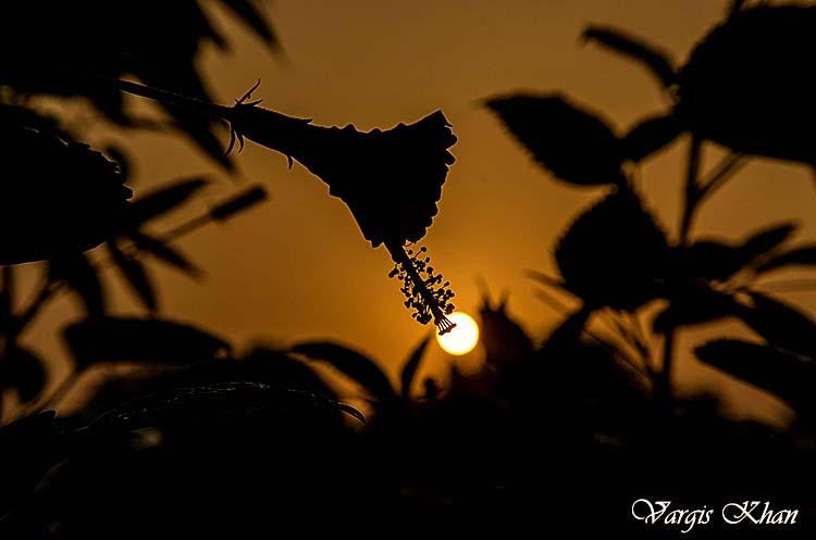 flowers-macro-photography-vargis-khan-2