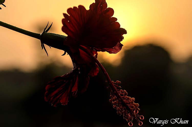 flowers-macro-photography-vargis-khan-3