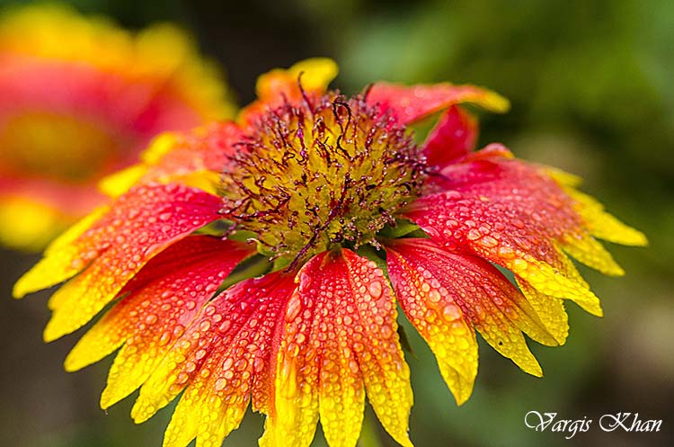flowers-macro-photography-vargis-khan-7