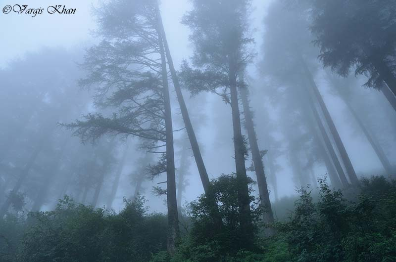 weather in dhanaulti