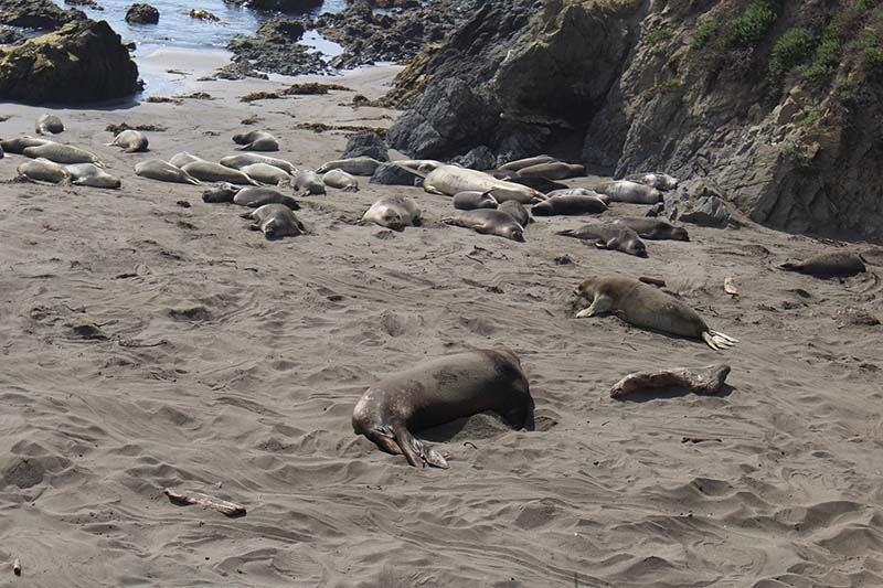 Elephant Seal viewpoint