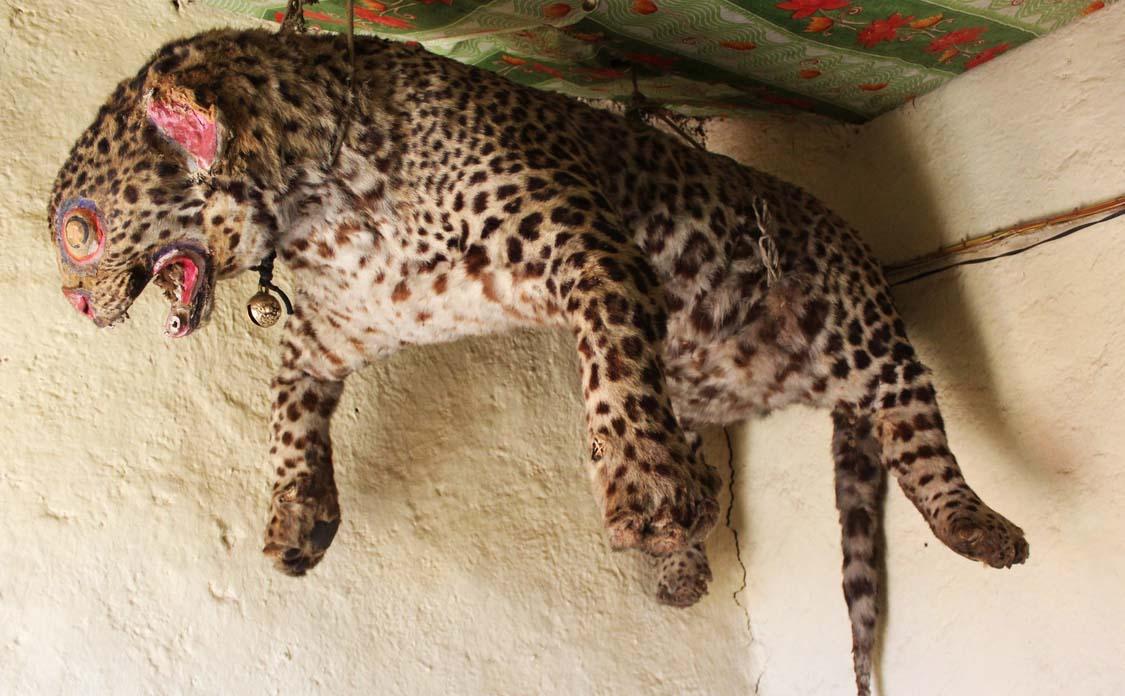 leopard in komic monastery