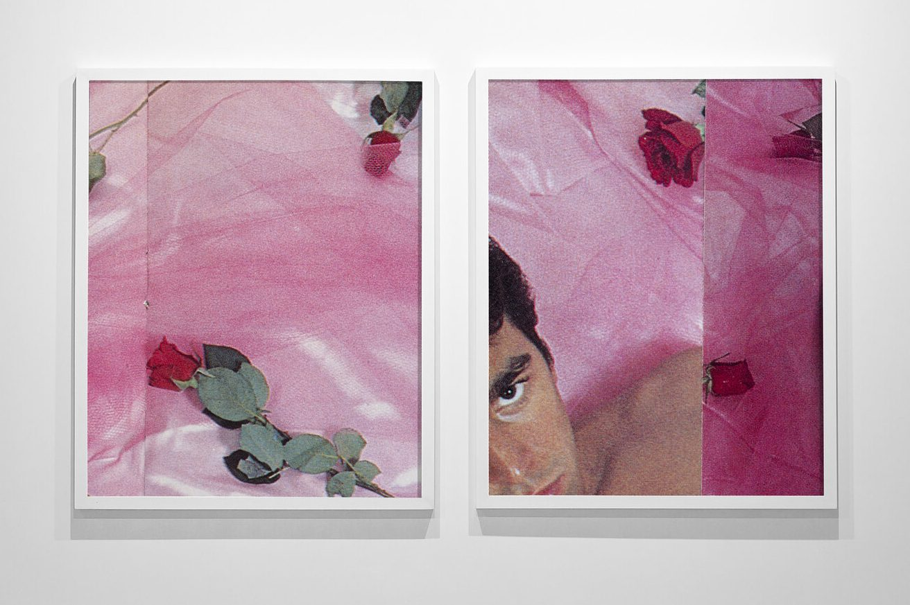 Two photographs hanging side by side. The left image shows three roses, two with red buds, the third extending out of the frame, all sitting on top of pink tulle. The right image has the same tulle and more roses, with a man's face in the bottom left corner. His dark brown eyes look intensely into the camera.