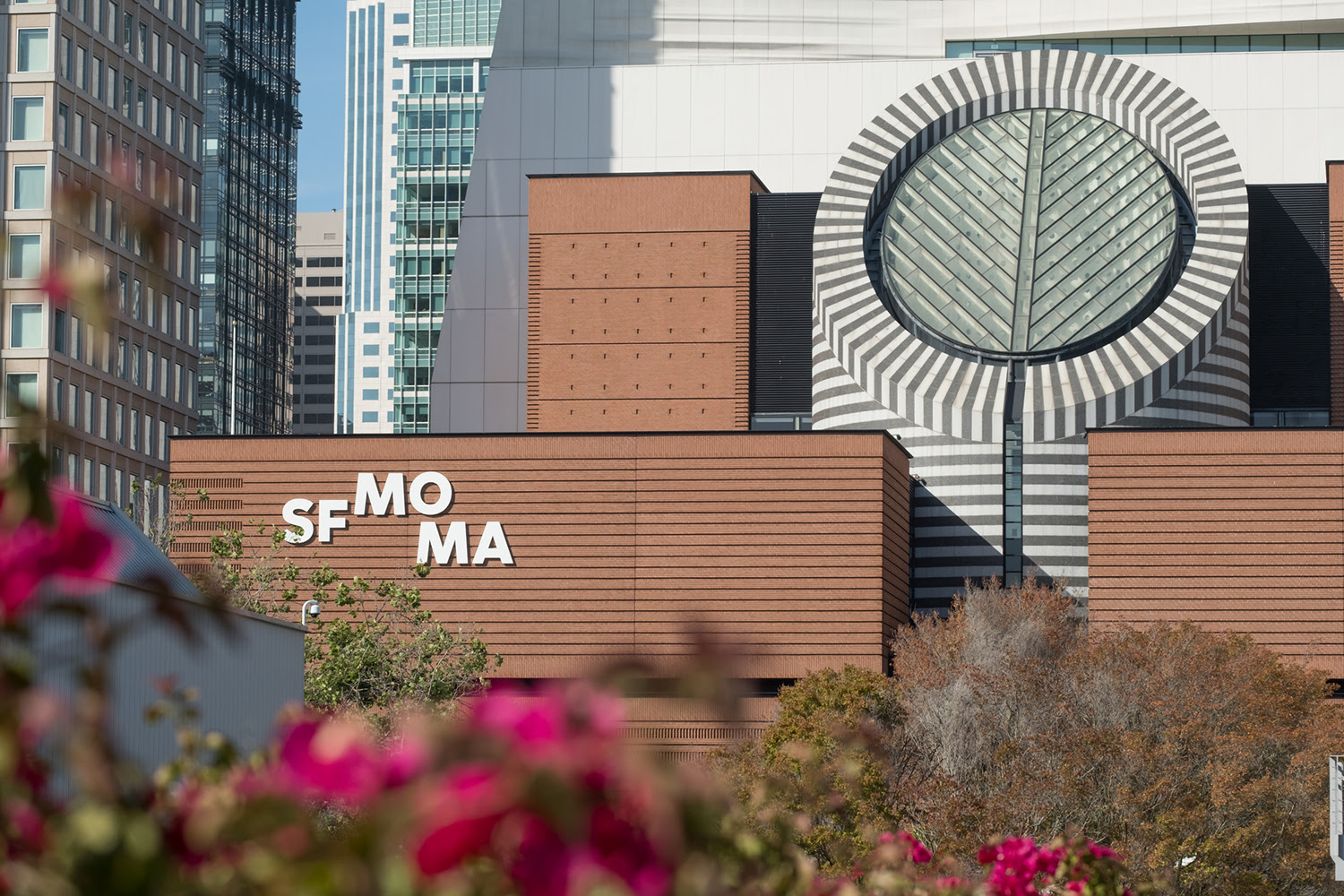 The San Francisco Museum of Modern Art façade viewed from the park across the street. Pink flowers frame the bottom left corner of the image.