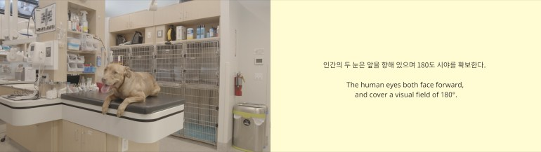 A diptych of two images. The image on the left is a tan dog lying on an exam table with its tongue out, looking at the camera. The room has tan walls, and there are two rows of cages on the back wall. There are shelves filled with medical supplies.