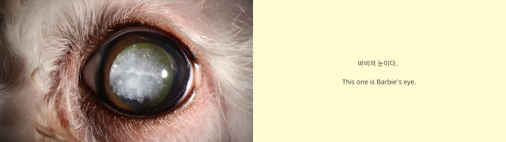 """A diptych of two images. On the left is a close-up view of an animal's eye. The animal has pink skin and white fur, and the wide pupil is cloudy. The image on the right has a cream background and text that reads """"This one is Barbie's eye"""" in Korean and English."""