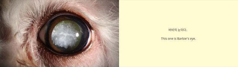 "A diptych of two images. On the left is a close-up view of an animal's eye. The animal has pink skin and white fur, and the wide pupil is cloudy. The image on the right has a cream background and text that reads ""This one is Barbie's eye"" in Korean and English."