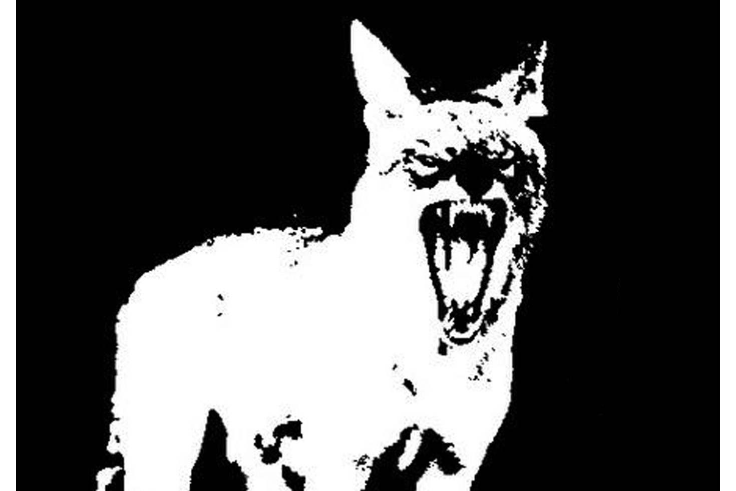 The Radio Coyote logo, a black and white image of a coyote with its mouth open, howling.