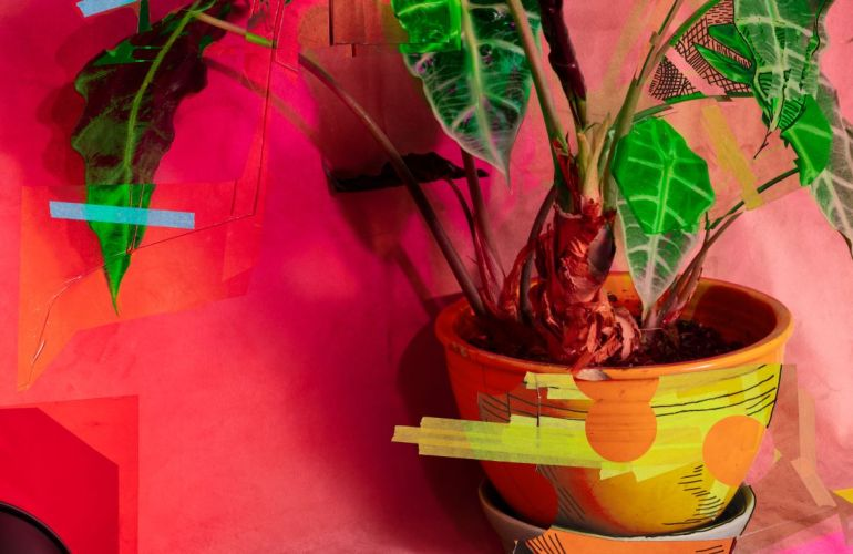 A collage piece appears first to be a photograph of a houseplant sitting in a pot with a fabric backdrop, some of its leaves taped to that backdrop. Instead, some portions are replaced with drawings on portions of paper, painting, sketches, a work finished and unfinished.