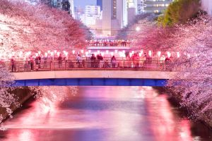 Cherry Blossom Light Up in Meguro River, Tokyo.