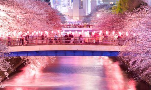 Cherry Blossom Light Up in Meguro River, Tokyo.