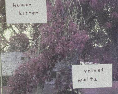 Human Kitten velvet waltz album cover