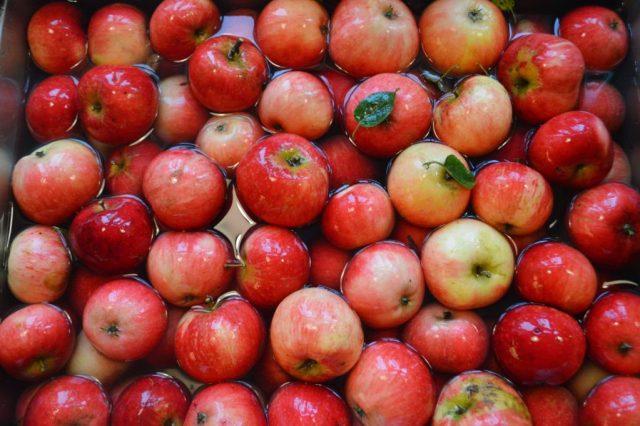 Æblerne skylles.