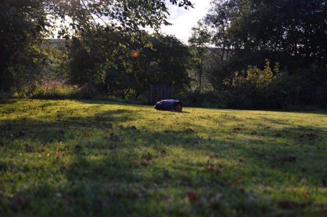 Robotplæneklipperen kan klare selv store græsplæner, bare den har tid nok.