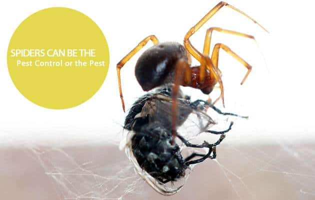 Buggs Pest Control Explains How To Ward Off Spiders Carpenter Ants Eden Prairie