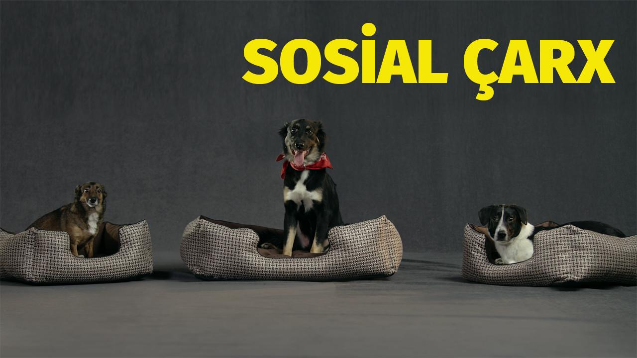 Kimsəsiz Heyvanlar Günü – Sosial Çarx