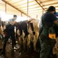 Hands-on bovine ultrasound course