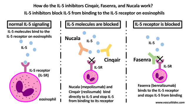 how-il-5-inhibitors-work.png