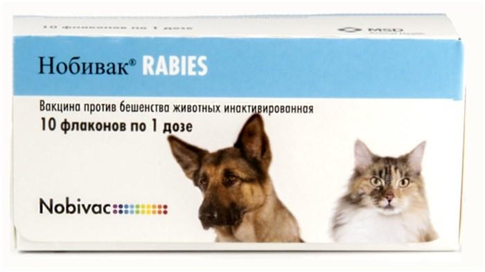 متى يجب تحصين القط ضد داء الكلب؟ رد فعل القط لتطعيم داء