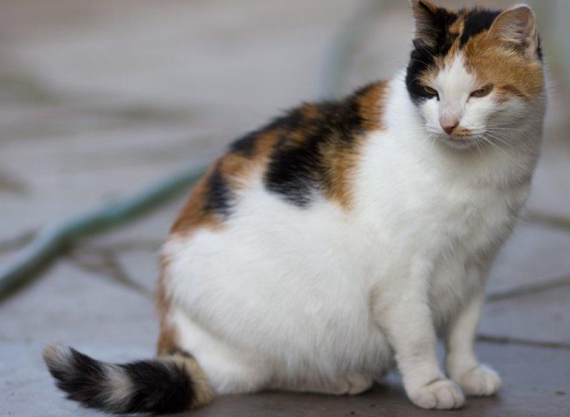 Как вызвать роды у кошки стимуляция и ускорение