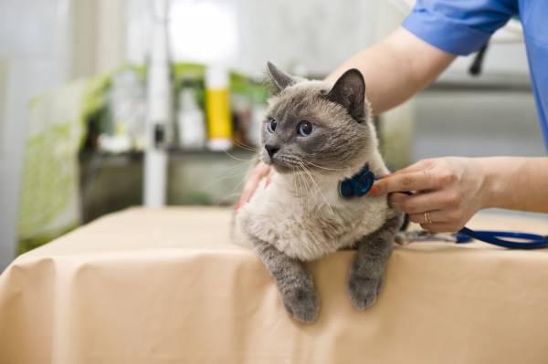 Желтуха у котов и кошек