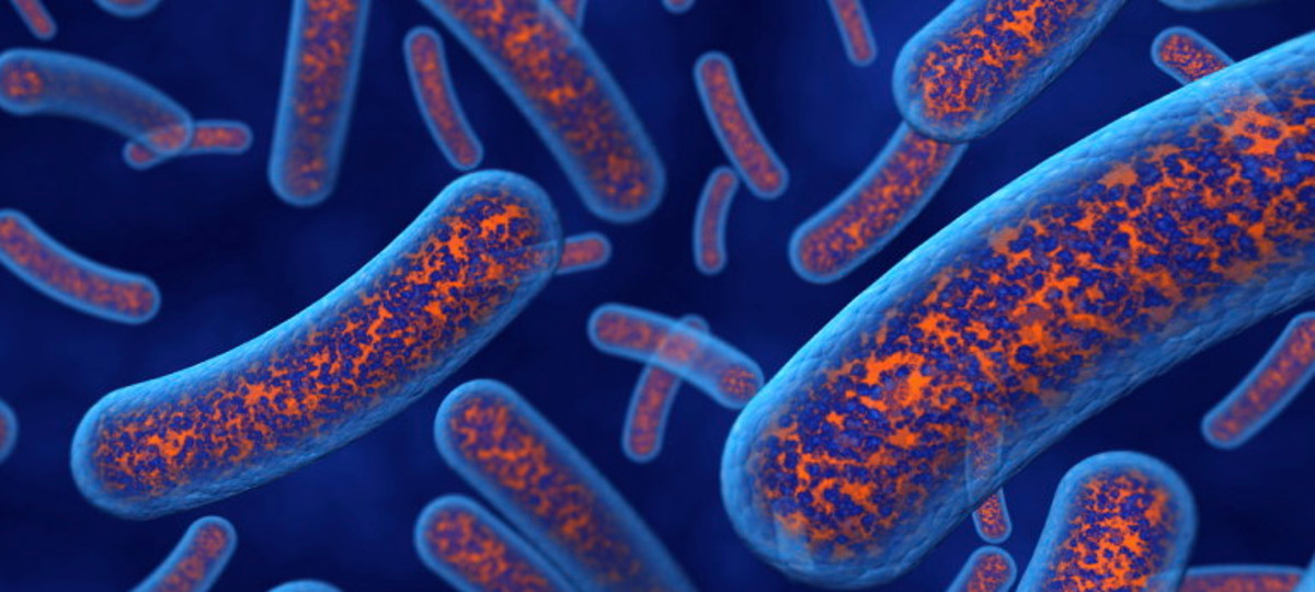 Did You Know That Many Disorders Of The Mind Are Influenced By The Gut Microbiome?