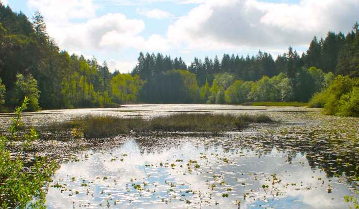 Fisher Pond, Vashon-Maury Island Land Trust