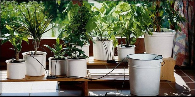 Autopolis de plantes FITILA