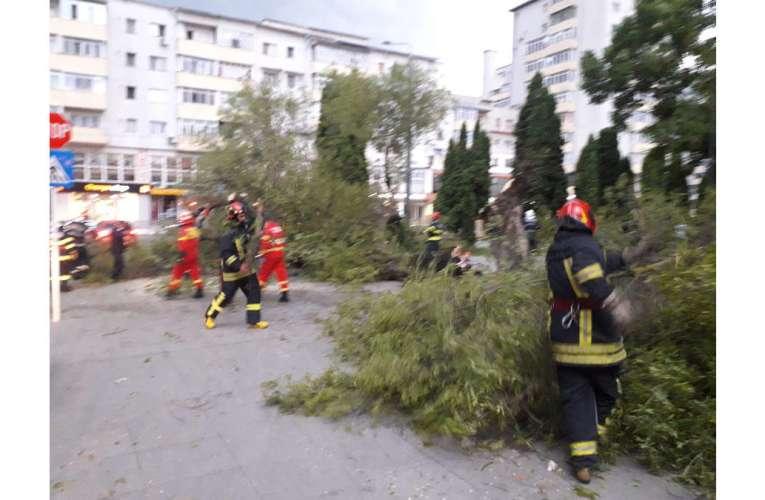 S-a prăbușit unul dintre arborii care au făcut istorie la Vaslui