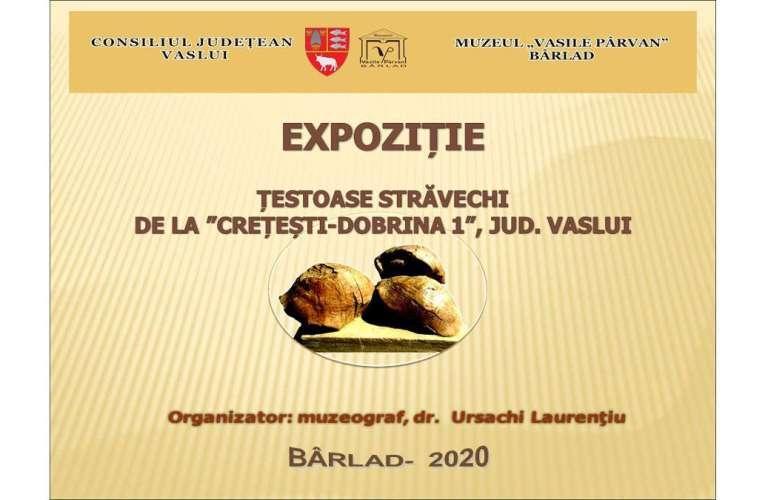 Știați că au existat țestoase la Crețești? Urmăriți expoziția on-line de la Muzeul Pârvan!