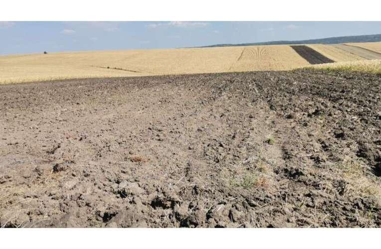 Bate vânt de foamete pe câmpurile Vasluiului! În județ, nu a mai plouat de pe 30 iulie!