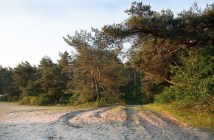 a.s.r. neemt Landgoed Junne over van Delta Lloyd