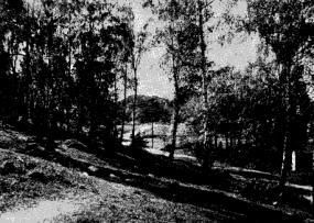 Björkdunge vid Danvikens kyrkogård