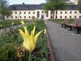 Blomsterrabatt vid Danvikens Hospital