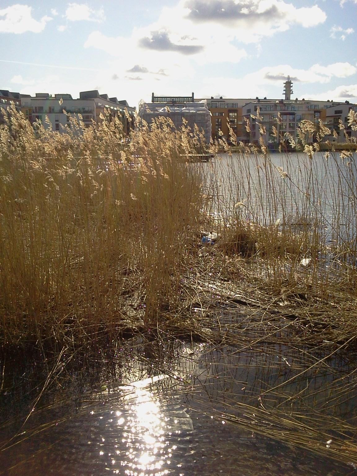 Avfall simmar i vassen vid udden mellan Henriksdalshamnen och Lugnet