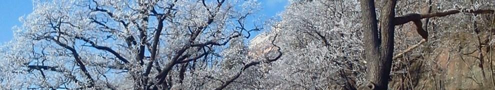 Rimfrost över träden vid promenadstråket runt Svindersviken
