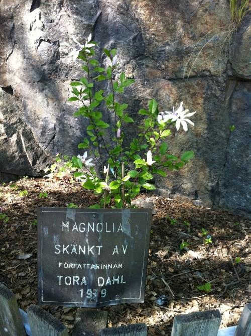 Tora Dahls praktmagnolia mellan Danvikshem och Vilans skola i Henriksdal