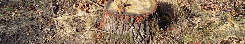 Vägbygge på Kvarnholmen förstör en liten skog - Kvarnholmsförbindelsen
