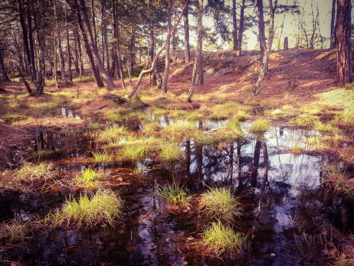 Våtmark i skogen Trolldalen på Henriksdalsberget i Nacka