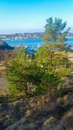 Bageriberget i Saltsjöqvarn: Gran och tall