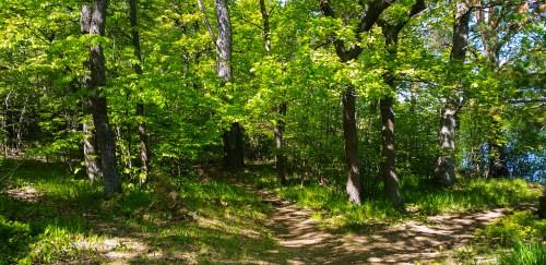 Tre stigar i skogen Fredriksberg på Kvarnholmen i Nacka