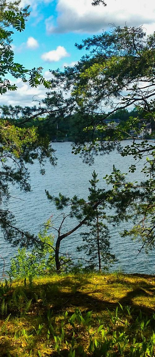 Inloppet syns mellan tallarna i skogen Fredriksberg på Kvarnholmen